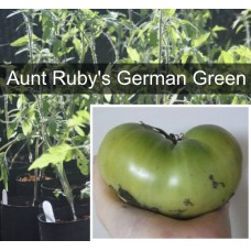 Aunt Ruby's German Green Tomato Plant